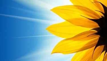 sunflower_1400
