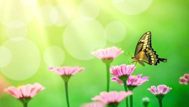 butterfly_1400