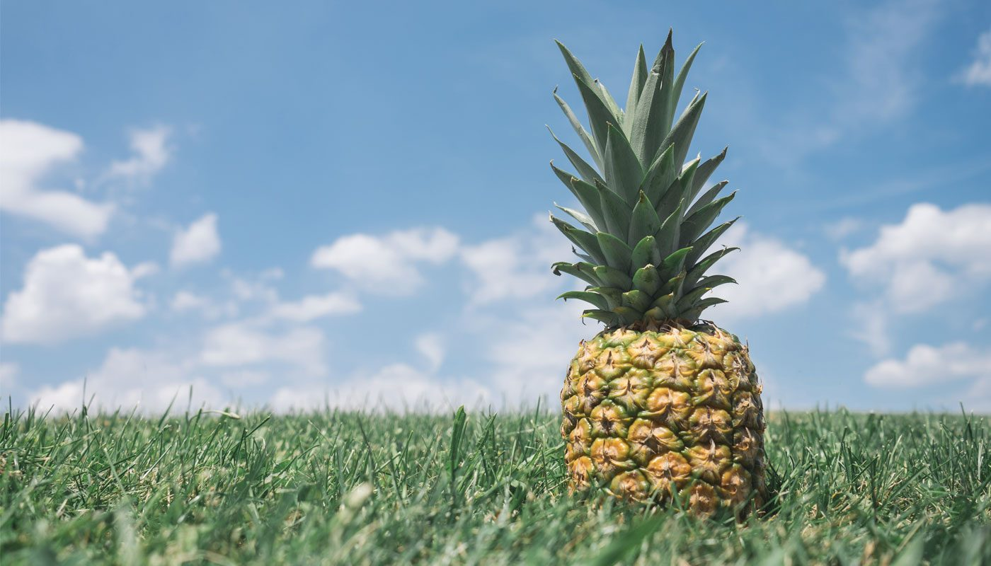 Pineapple in a field. Because, why not?
