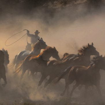 Rounding up the horses