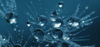 Content ideas represented as droplets caught in a web