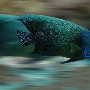 Fast moving fish illustrating article about AMP pages