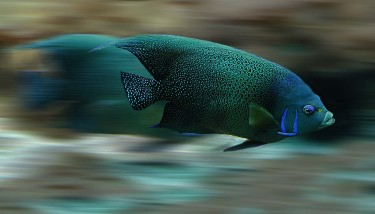 fast-fish