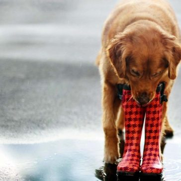 Image of a dog for: Predictive analytics for PPC