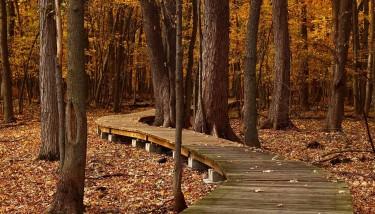 path-through-trees