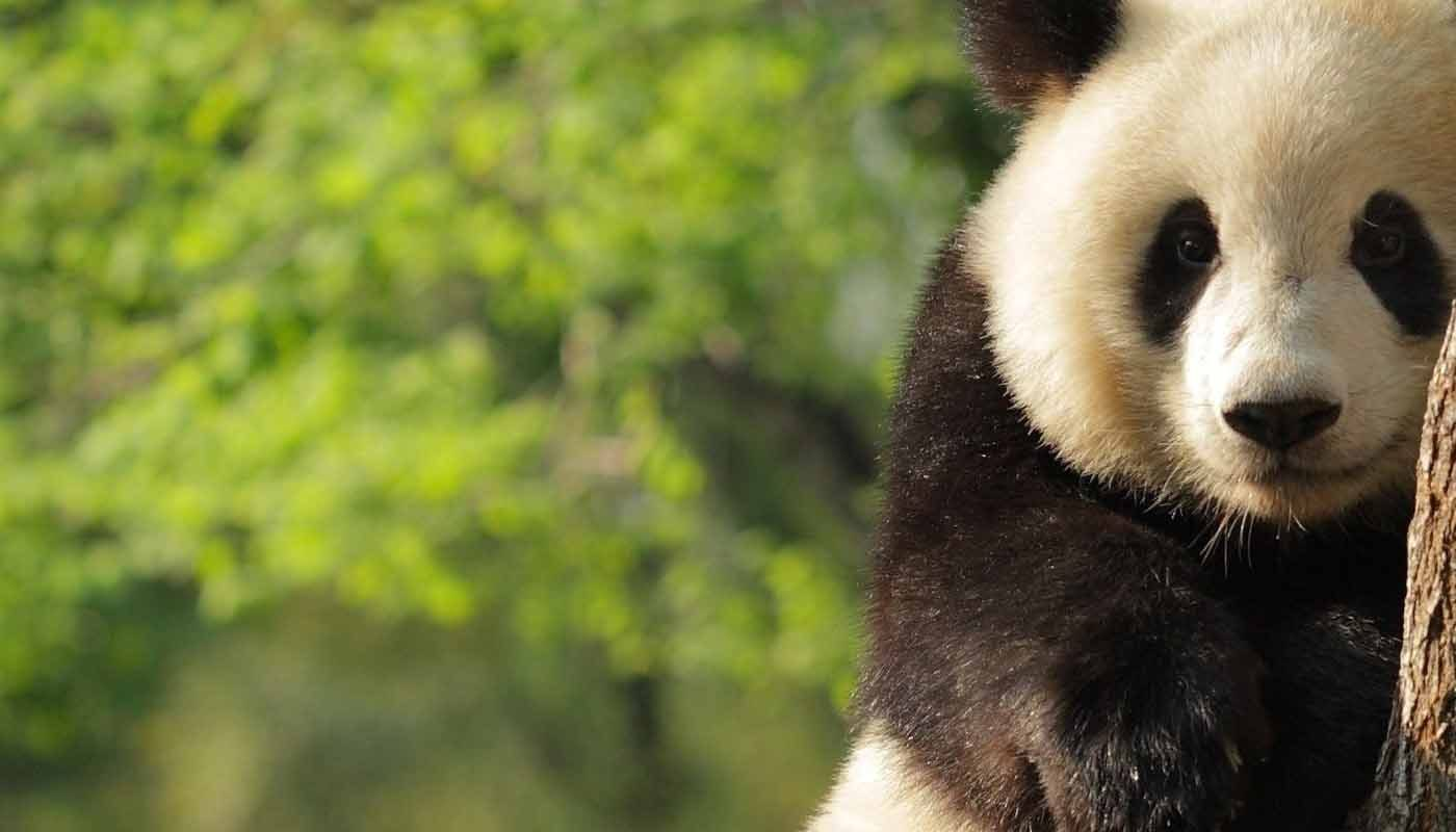 Is Google's Panda algorithm still relevant in 2018?