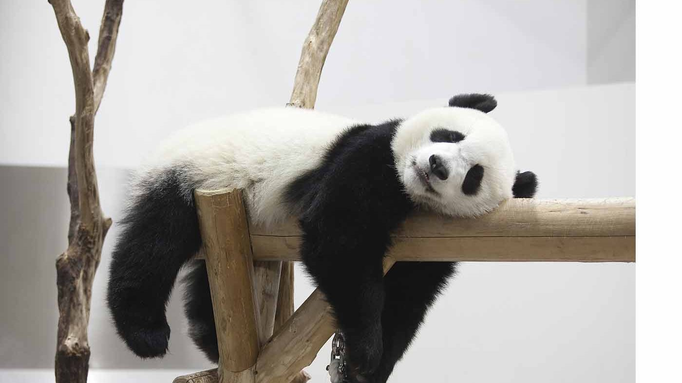Google Panda: Everything you need to know in 2021