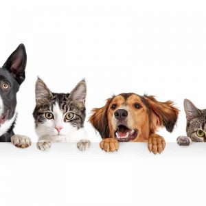 Dogs versus cats – which are best?