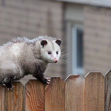 Google Possum 2.0 update – your questions answered