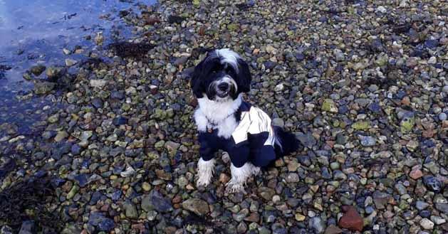 Jo's dog Oscar
