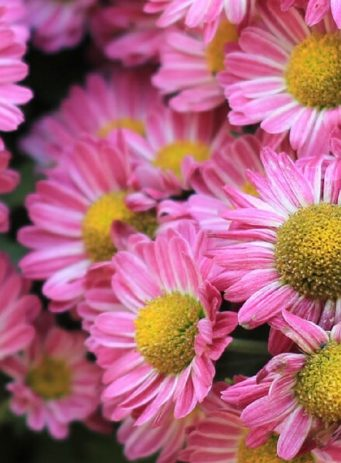 Sarah Raven eCommerce case study for gardening