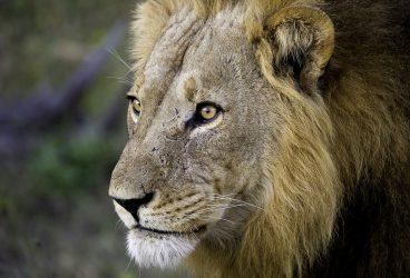 Zambezi Safaris